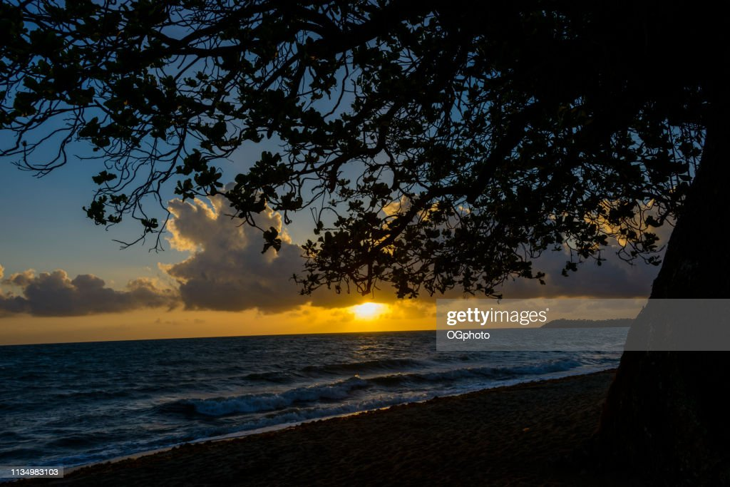 Sunrise at the beach with silhouette of tree : Stock Photo
