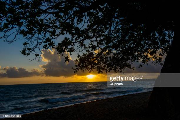 Sunrise at the beach with silhouette of tree