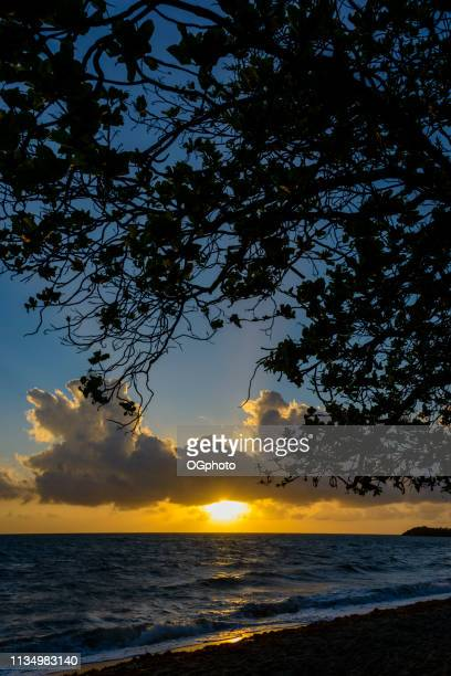 sunrise at the beach with silhouette of tree - ogphoto stock photos and pictures