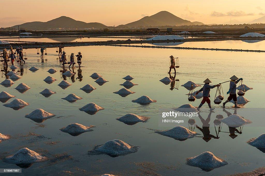 Sunrise at the salt field : Stock Photo