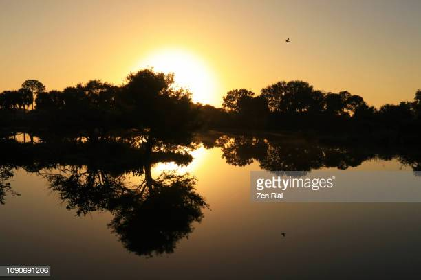 sunrise behind silhouetted and reflected trees in a wetland in south florida, usa - delray beach stock pictures, royalty-free photos & images