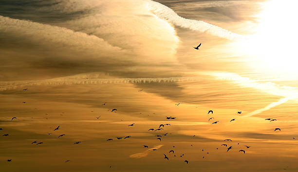 Birds Flying Sky Sunset | Photos.com