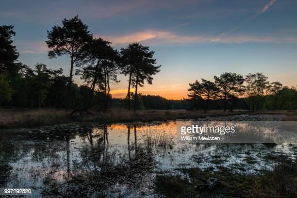 sunrise colors - william mevissen bildbanksfoton och bilder