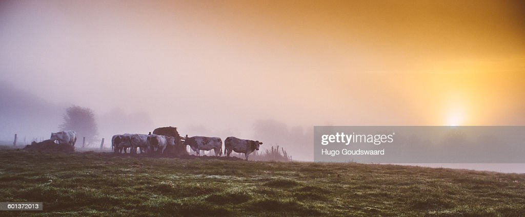 Sunrise country fields : Stock Photo