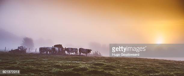 sunrise country fields - belgië stockfoto's en -beelden