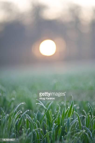 sunrise dew - altug karakoc - fotografias e filmes do acervo