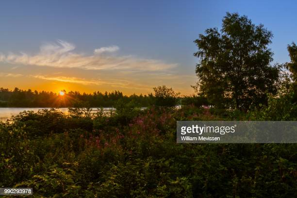 sunrise flowers - william mevissen stock photos and pictures