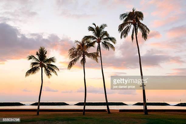 Sunrise, Four Palm Trees, Waikiki, Honolulu, Oahu, Hawaii