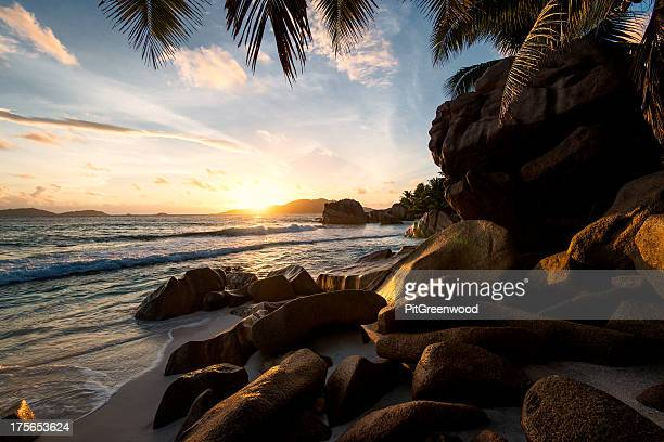 sunrise framed by palm trees and rock formations
