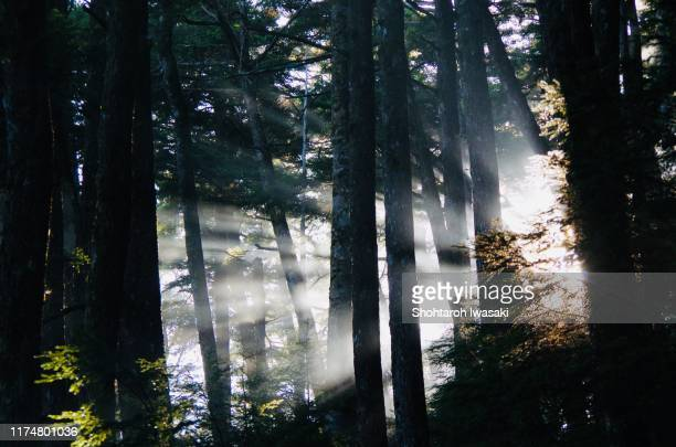 sunrise from kumotori forest - schwarzwald stock-fotos und bilder