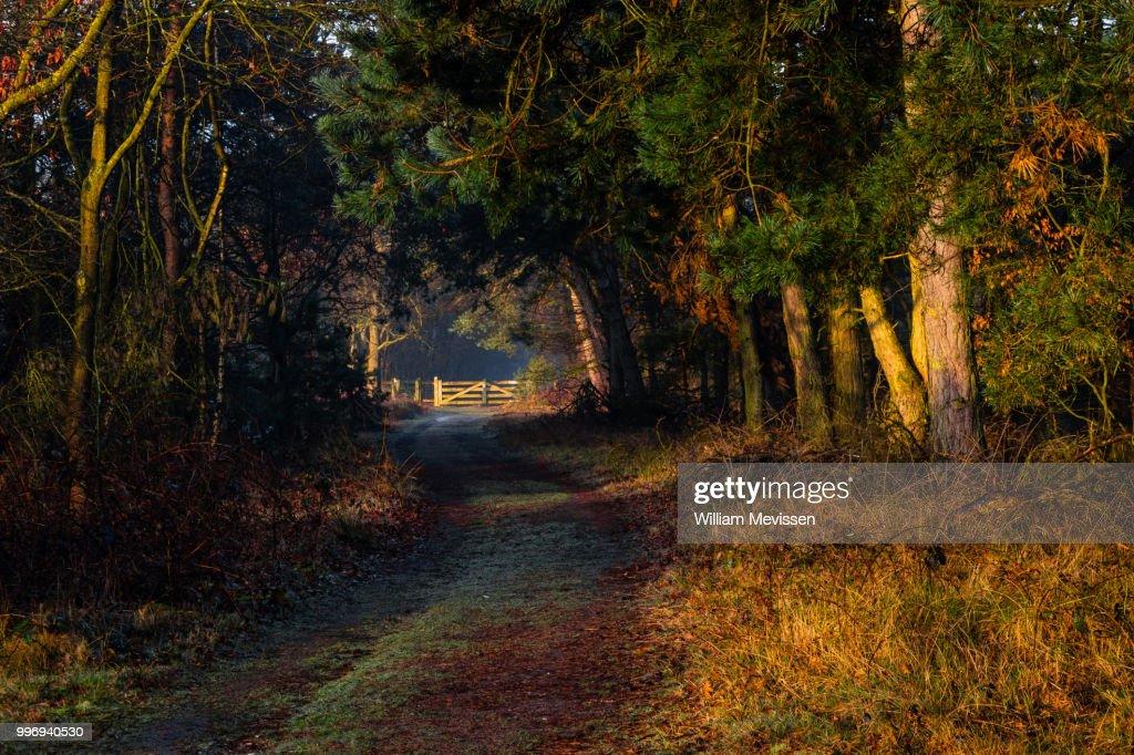Sunrise Gate : Stockfoto