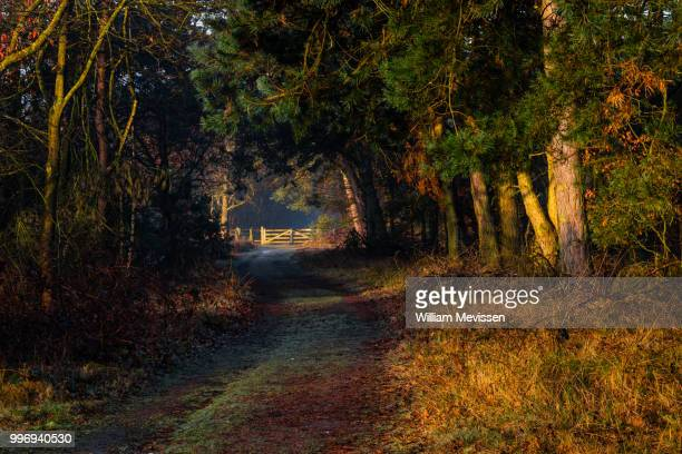 sunrise gate - william mevissen stock pictures, royalty-free photos & images