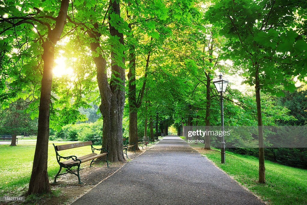 日の出は、グリーンパーク : ストックフォト