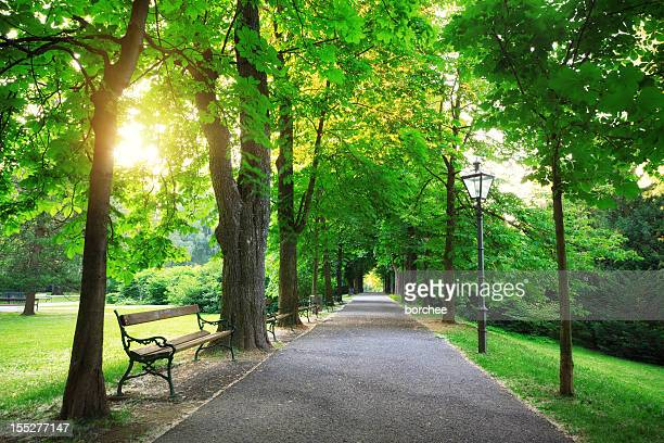 sunrise in a green park - public park stock photos and pictures