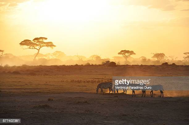 sunrise in amboseli - kenya stock pictures, royalty-free photos & images
