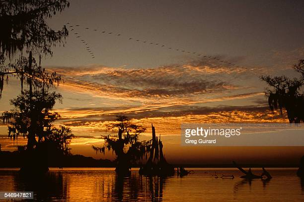 Sunrise in Atchafalaya Basin