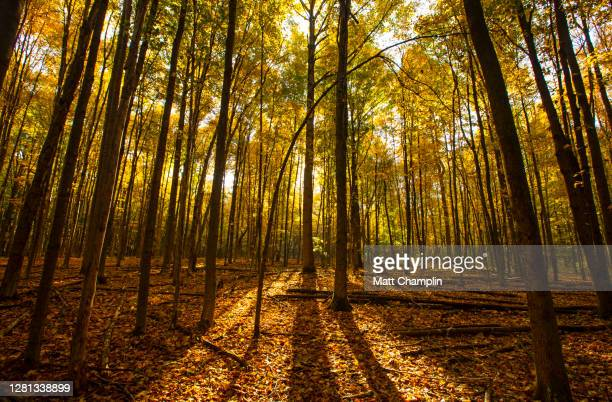 sunrise in beautiful woodland in autumn - syracuse new york stock pictures, royalty-free photos & images