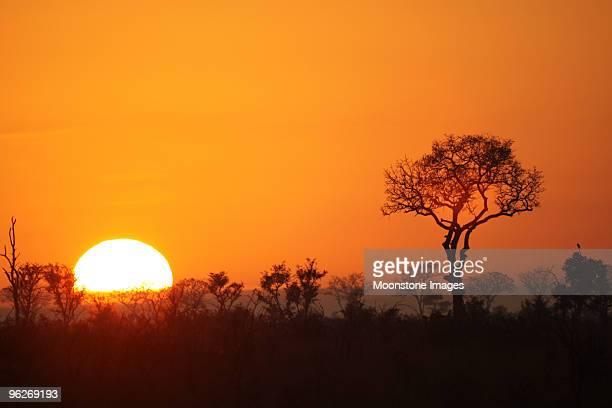 Lever du soleil de Kruger Park, Afrique du Sud