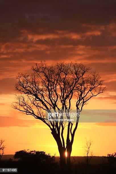 Sonnenaufgang im Kruger Nationalpark, Südafrika