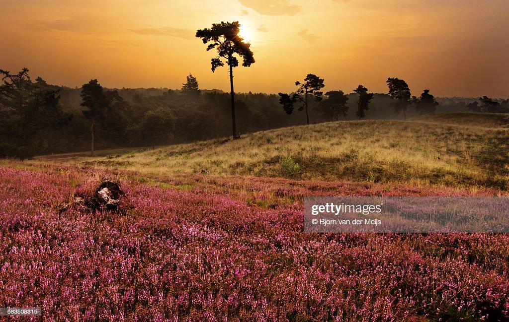 Sunrise in National Park : Stock Photo