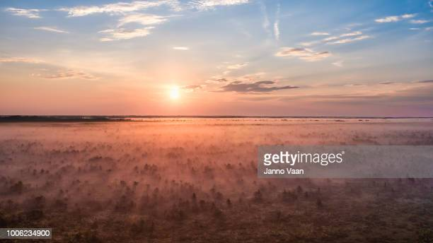 sunrise in the bog - estonia stock photos and pictures