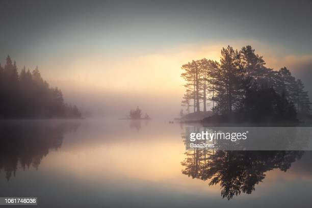 sunrise in the forest - lake stock pictures, royalty-free photos & images
