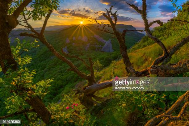 Sunrise in the highlands. Old tree and pink spring flowers in the foreground. Landscape with the sun. Morning in the mountains. Ilyas-Kaya mountain, Crimea
