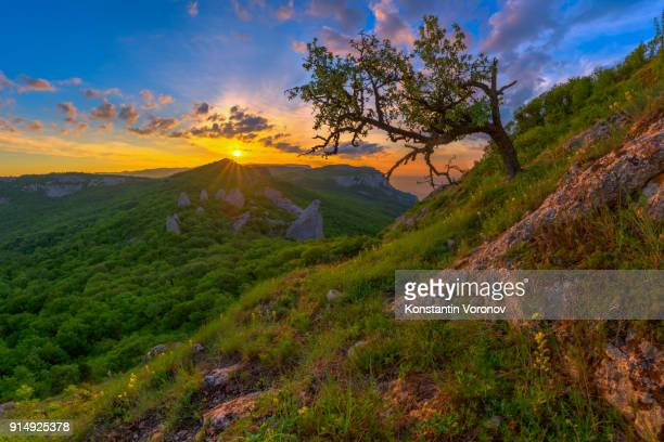 Sunrise in the highlands. Old tree and spring grass in the foreground. Landscape with the sun. Morning in the mountains. Ilyas-Kaya mountain, Crimea
