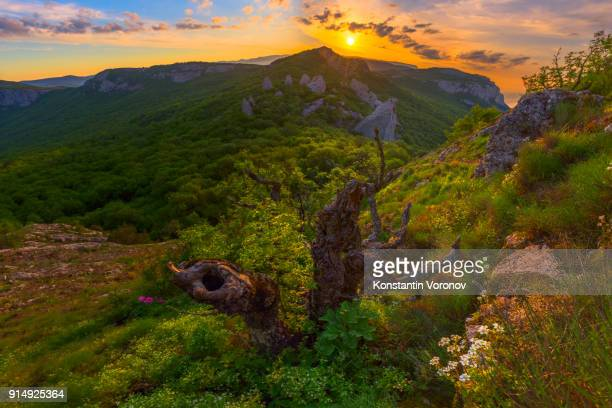 Sunrise in the highlands. Old tree and white spring flowers in the foreground. Landscape with the sun. Morning in the mountains. Ilyas-Kaya mountain, Crimea