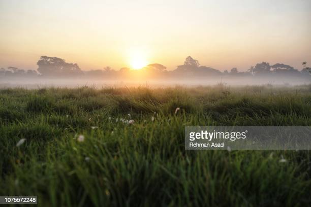 sunrise in the morning - winter bangladesh stock photos and pictures