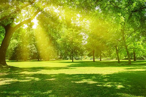 Sunrise in the park 921341724