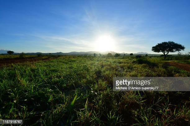 sunrise in the savannah with dew - humid stock pictures, royalty-free photos & images