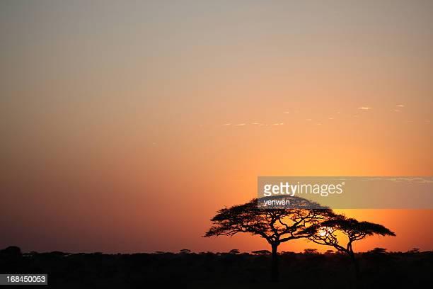 Coucher de soleil africain dans le Serengeti