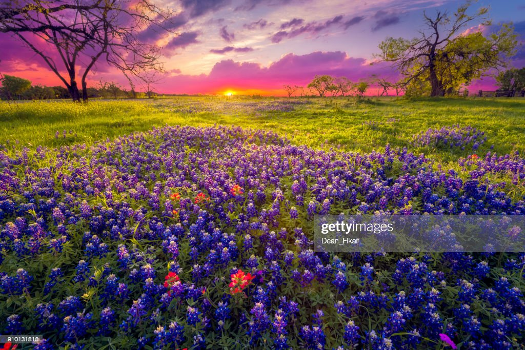 Sunrise in the Texas Hill Country : Stock Photo