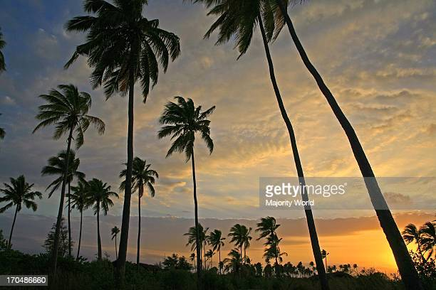 sunrise in tropical paradise with coconut palm trees Matemo Island Quirimbas archipelago Mozambique