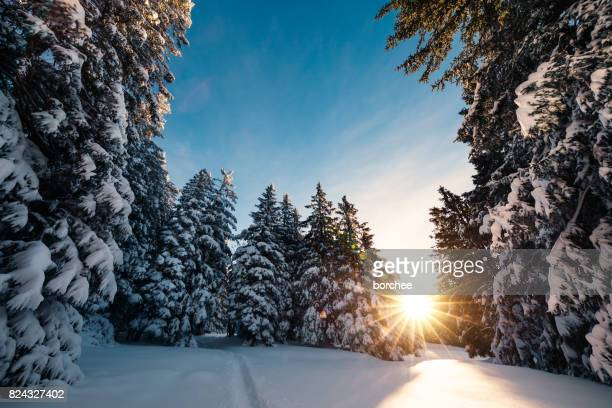 sunrise in winter forest - december stock pictures, royalty-free photos & images