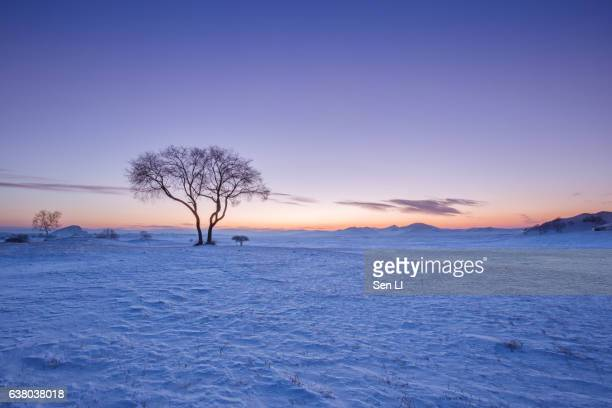 sunrise landscape in winter, inner mongolia - snowfield stock pictures, royalty-free photos & images