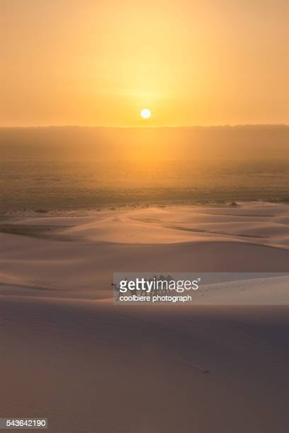 sunrise landscape with of gobi sanddune with camel herd - gobi desert stock pictures, royalty-free photos & images