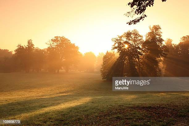 sunrise morning park bad muskau - sonnig stock pictures, royalty-free photos & images