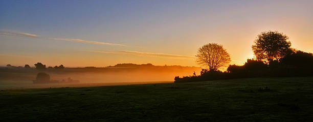 Sunrise New Forest Style