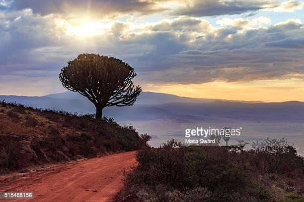 Sunrise, Ngorongoro Conservation Area, Tanzania
