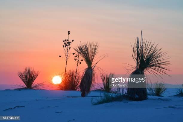 sunrise of the dunes - don smith ストックフォトと画像