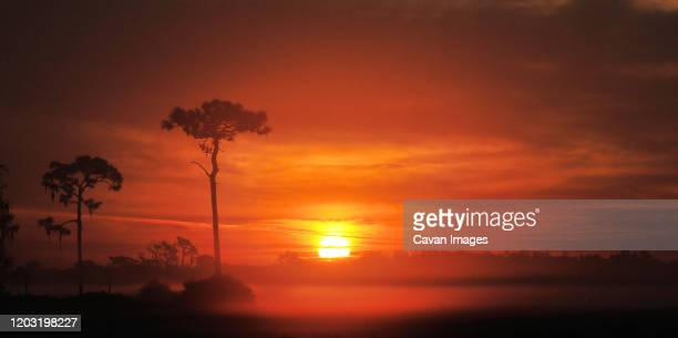 sunrise off joe overstreet road south of st cloud, florida - kissimmee stock pictures, royalty-free photos & images