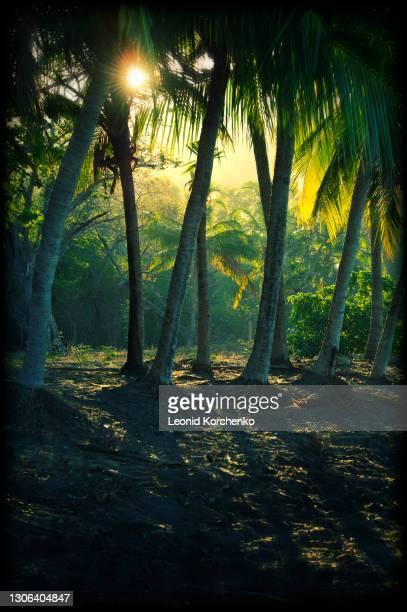 sunrise on a black sand beach at papagayo bay. - papagayo guanacaste fotografías e imágenes de stock