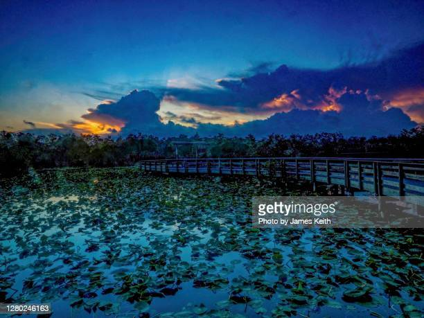 sunrise on anhinga trail - anhinga_trail stock pictures, royalty-free photos & images