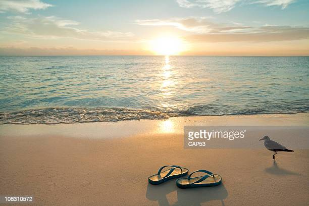 sunrise on flip-flops at the beach - sandal stock pictures, royalty-free photos & images
