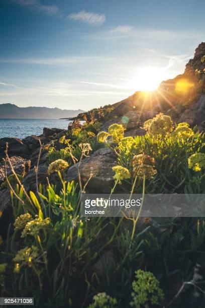 Sonnenaufgang auf der Insel Hvar