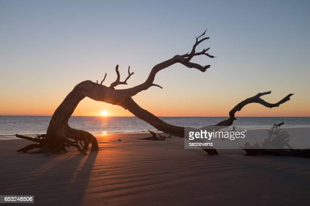 Sunrise on Jekyll Island Driftwood Beach