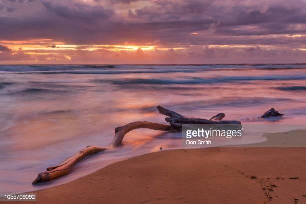 sunrise on kauai east-facing beach - don smith stockfoto's en -beelden