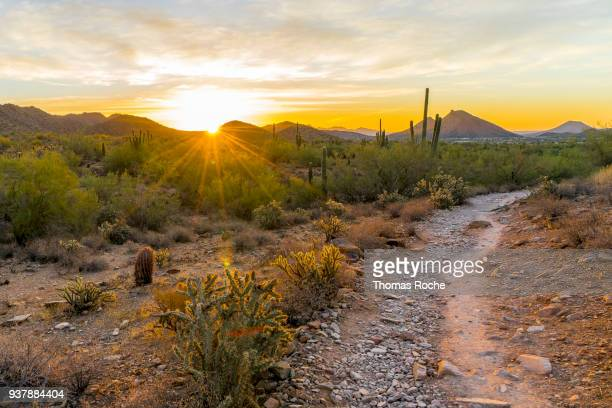 Sunrise on the desert trail
